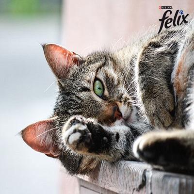 felix kedi konservesi