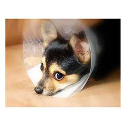 Dermo-Vet - Dermo-Vet Şeffaf Çizgili Köpek Elisabeth Yakalığı